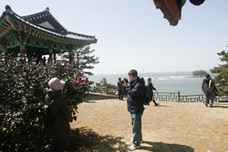 Seocheon Camellia Octopus Festival