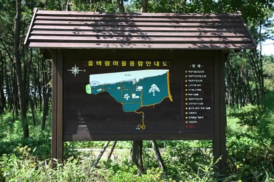 장항송림산림욕장7